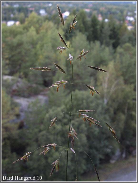 eskorte moss eskorte i østfold